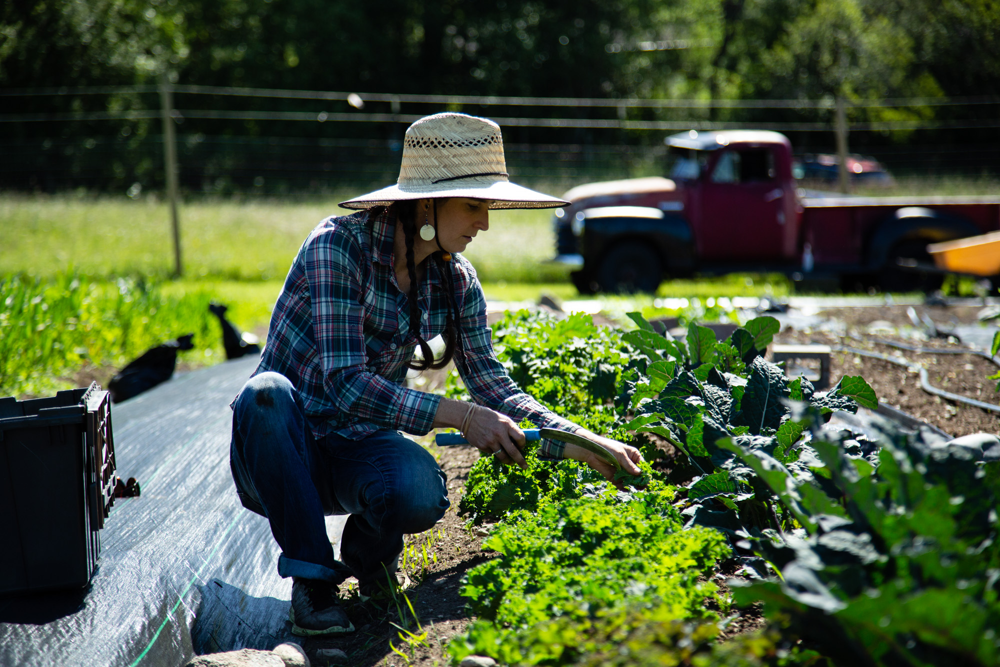 Meet Your CSA Farmer Campaign – Connecting Consumers to Community Supported Agriculture Farms in WA State