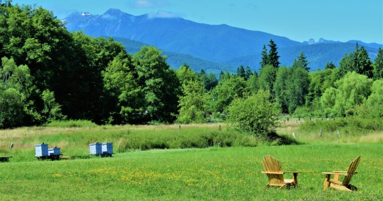 Sequim Bee Farm