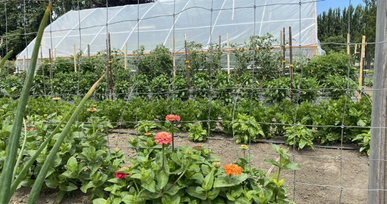 Beanstalk Farm